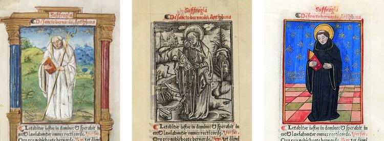 One Saint Bernard, three treatments