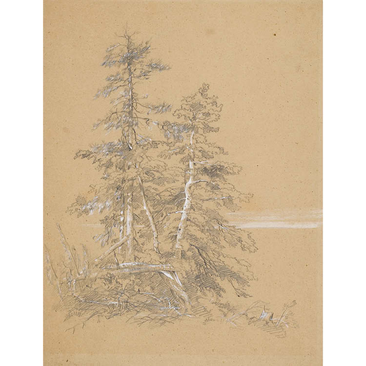 Evergreen Trees, Mount Desert Island