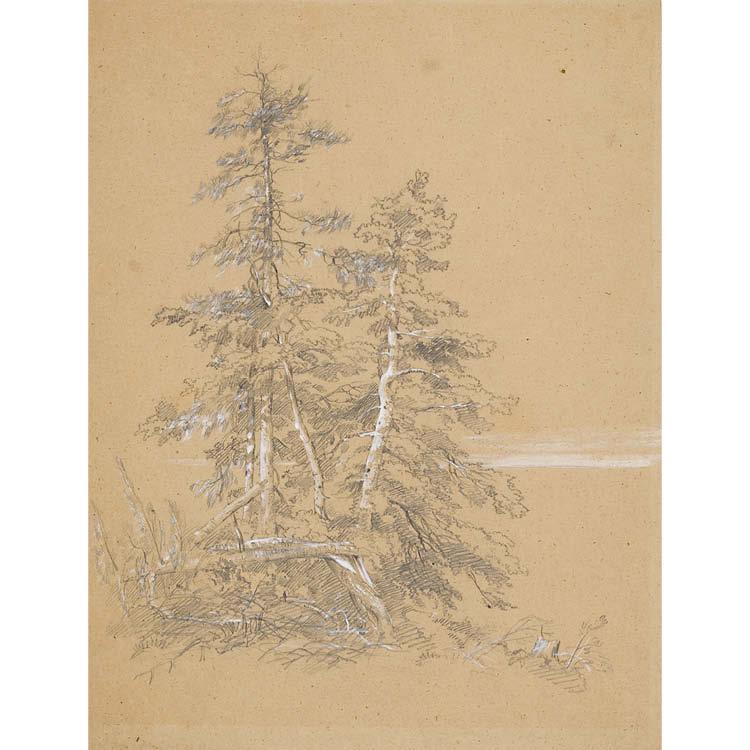 Evergreen Trees, Mount Desert Island