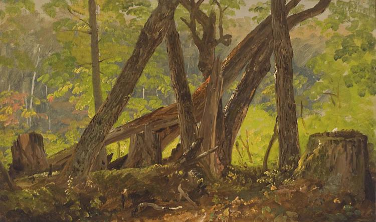 Wood Interior on Mount Turner