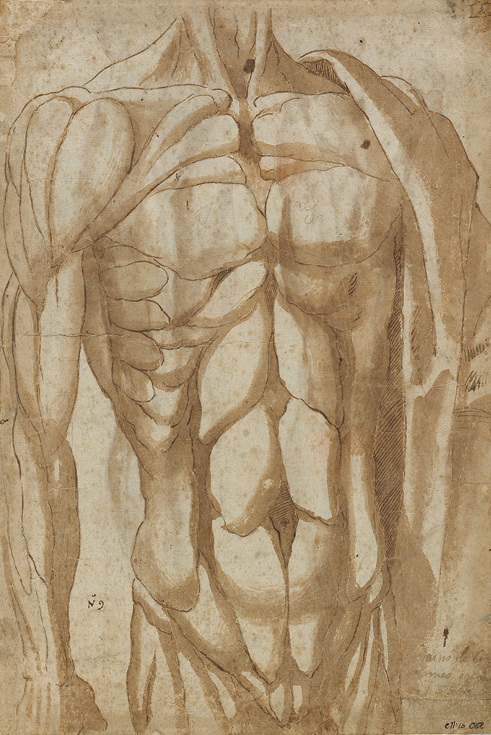 Study of a Flayed Torso 1554. Bartolommeo da Arezzo (Italian, d. 1578). Pen and brown ink and brush and brown wash over black chalk; 40.5 x 27.6 cm. L. E. Holden Fund, 1975.26.b