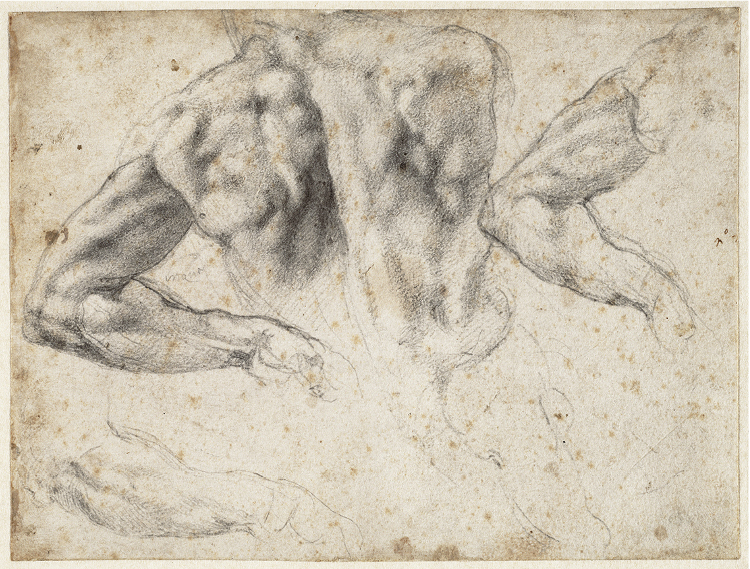Study of the back and left arm of a male nude for the tomb of Giuliano de' Medici, 1523–24. Black chalk; 19.2 x 25.7 cm  All works on these pages: Michelangelo Buonarroti (Italian, 1475–1564). Teylers Museum, purchased in 1790. © Teylers Museum, Haarlem
