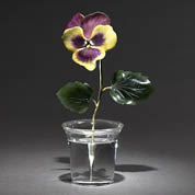 Flower Study of a Pansy, Fabergé