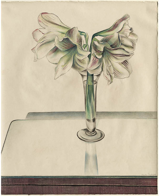 Amaryllis 1924. Charles Sheeler (American, 1883–1965). Pastel; 55.5 x 68.6 cm. Purchase from the J. H. Wade Fund, 1927.48