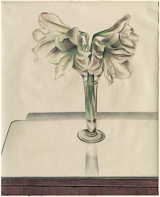 Amaryllis 1924. Charles Sheeler (American, 1883–1965). Pastel; 55.5 x 68.6 cm. Purchase from the J.H. Wade Fund, 1927.48