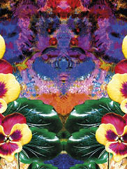 decorative floral graphic