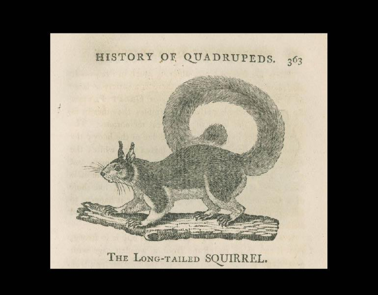 A General History of Quadrupeds, 1792, page 363