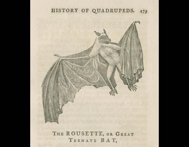 A General History of Quadrupeds, 1792, page 479