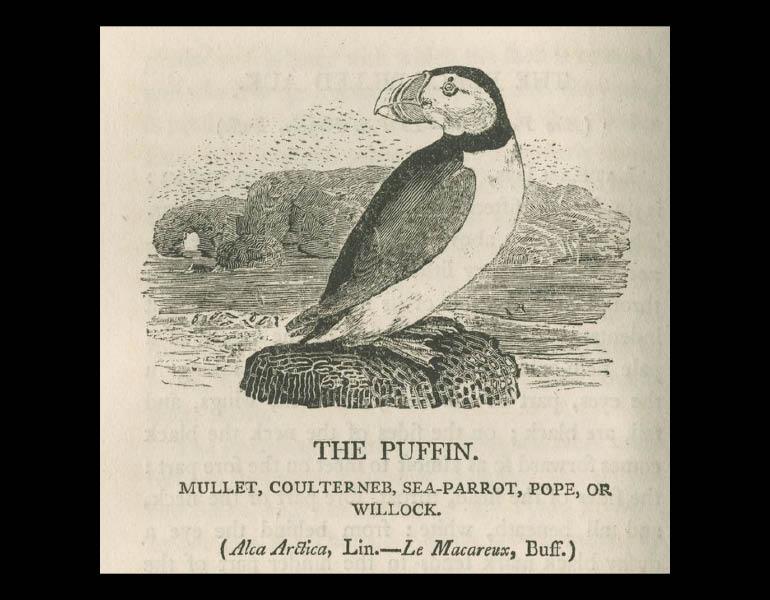 British Birds: Vol 2, Water Birds, page 168