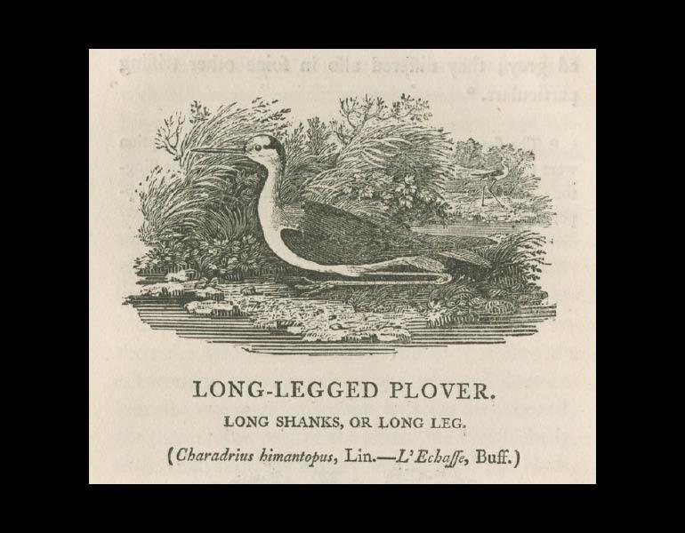 British Birds: Vol 2, Water Birds, page 4