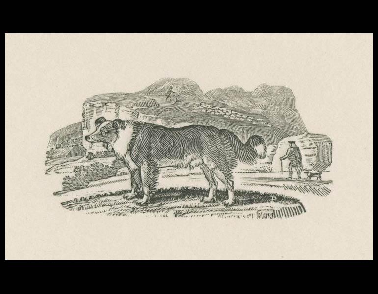"""Thomas Bewick Portfolio, 1945, Plate 8 """"Shepherd's Dog"""""""