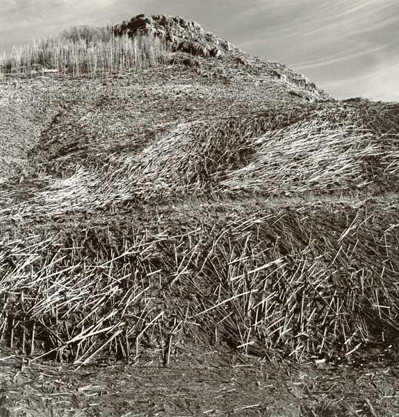 Elk Rock, Mount St. Helens,Washington, 1981. Emmet Gowin  (American, born 1941). Gelatin silver print; 11 x 14 in. © Emmet and Edith Gowin; courtesy Pace/MacGill Gallery, New York