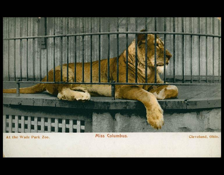 "Postcard, ""At the Wade Park Zoo. Miss Columbus. Cleveland, Ohio."" (front) IML P000073"