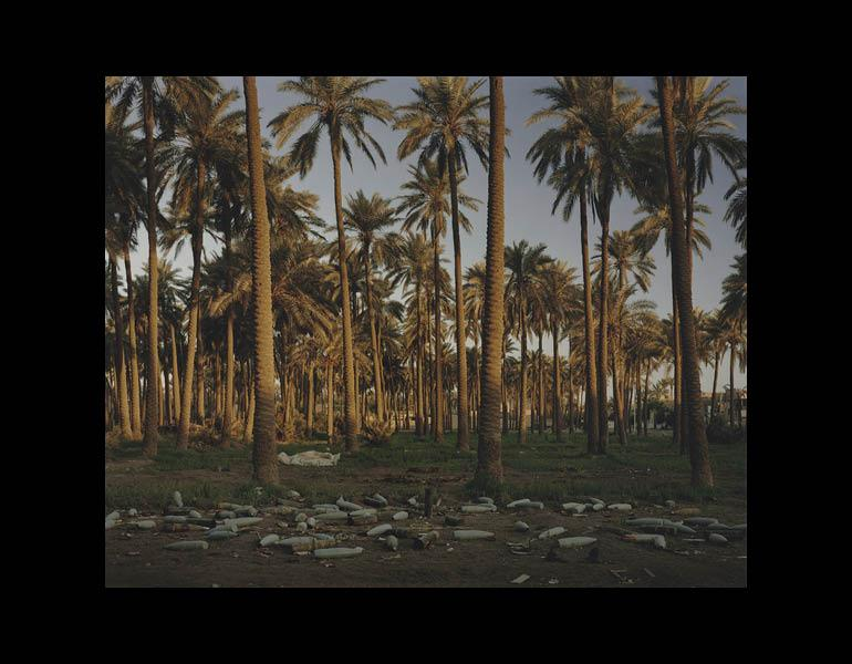 Date Grove, Haifa Street, Baghdad, 2003. Simon Norfolk (British, b. 1963). Chromogenic process color print; 48.6 x 60.8 cm. The Julius L. Greenfield Photography Acquisition Fund 2008.162 © Simon Norfolk, Courtesy Bonni Benrubi Gallery, NYC