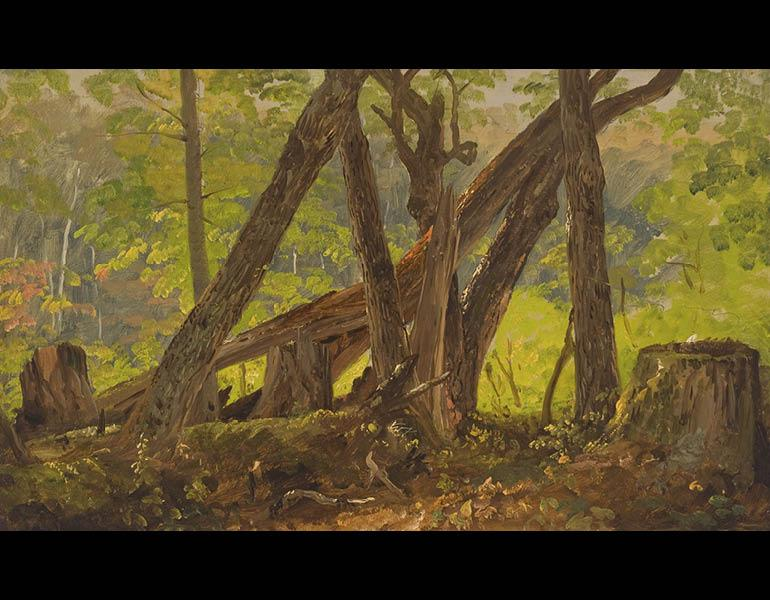 Wood Interior on Mount Turner, c. 1877. Frederic Edwin Church (American, 1826–1900). Oil and graphite on paper mounted on canvas; 31.3 x 51.6 cm. Olana State Historic Site, Hudson, NY, Office of Parks, Recreation and Historic Preservation OL.1980.1869.