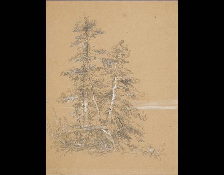 Evergreen Trees, Mount Desert Island, c. August 1850. Frederic Edwin Church (American, 1826–1900). Graphite and gouache on coarse light brown paper; 37.2 x 28.6 cm. Olana State Historic Site, Hudson, NY, Office of Parks, Recreation and Historic Preservati