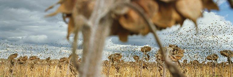 Blackbirds (detail), from My Dakota, 2005–11. Rebecca Norris Webb (American, born 1956). Type- C Photographic Print, 26 x 35 ½ in. Courtesy of the artist.