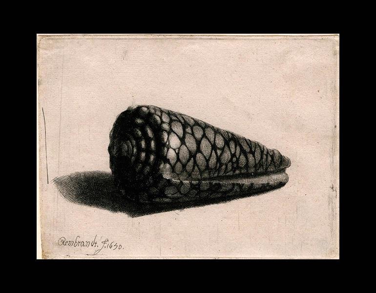 The Shell, 1650. Rembrandt van Rijn (Dutch, 1606–1669). Etching, drypoint, and engraving; 9.7 x 13 cm. The Morgan Library & Museum, Acquired by J. Pierpont Morgan, 1905. Photo: Graham S. Haber, 2011