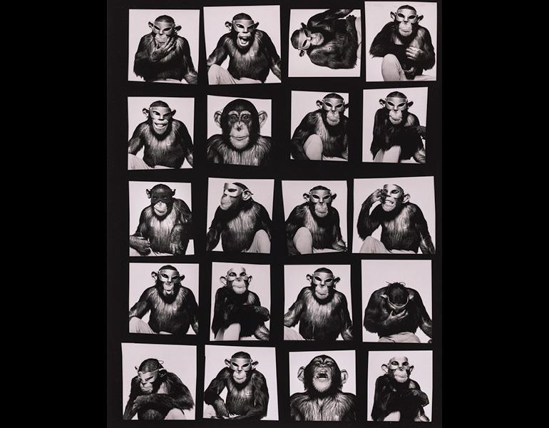 Monkeys with Masks
