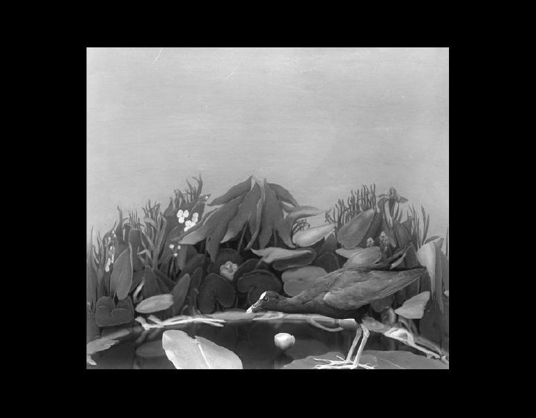 Model: Pool in open swamp, Children's Museum, 1921. IML 965788