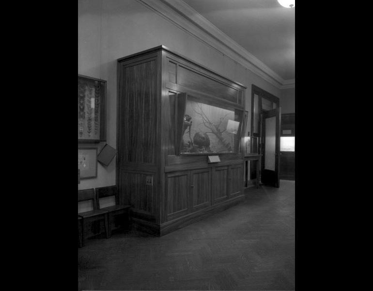 Model: Beaver Group, Children's Museum, 1921. IML 961930